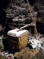 【12月31日限定】大晦日は金沢で♯雪椿の年越しプラン♯